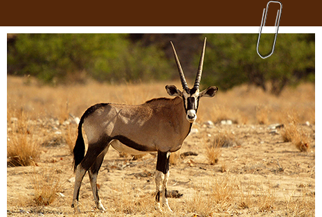Plains Animals (springbok, gemsbok, mountain zebra, etc.) have increased 10 fold since 1980